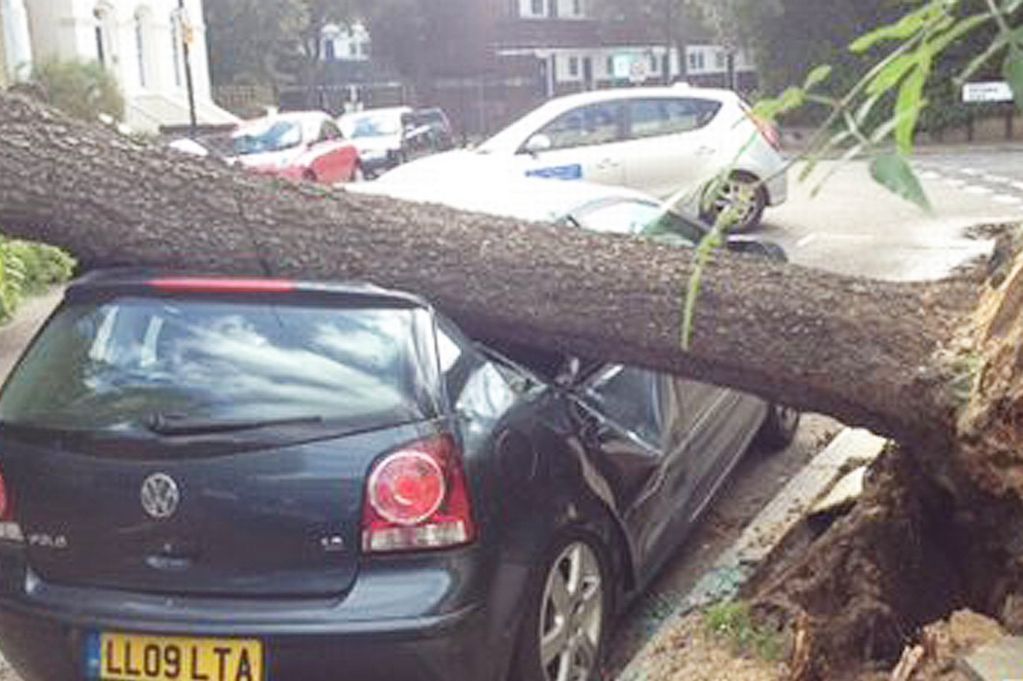 Fallen-tree-on-car-in-north-London-2646870