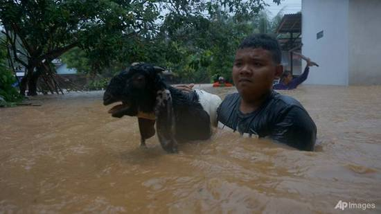 indonesia-flood-goat
